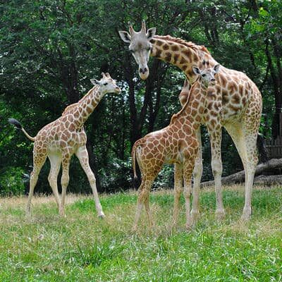 Bronx Zoo Reopening
