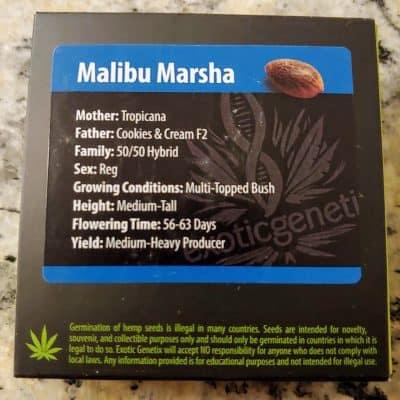 EXOTIC_GENETIX_MALIBU_MARSHA_LUSCIOUS_GENETICS