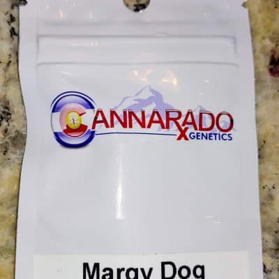 CANNARADO_GENETICS_MARGY_DOG_LUSCIOUS_GENETICS