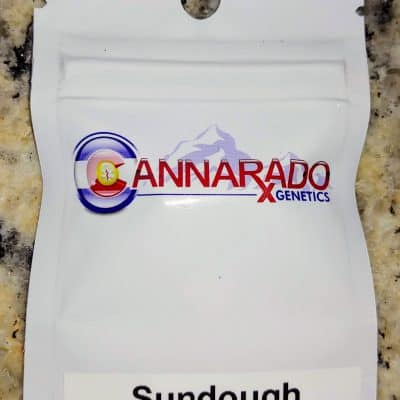CANNARADO_GENETICS_SUNDOUGH_LUSCIOUS_GENETICS