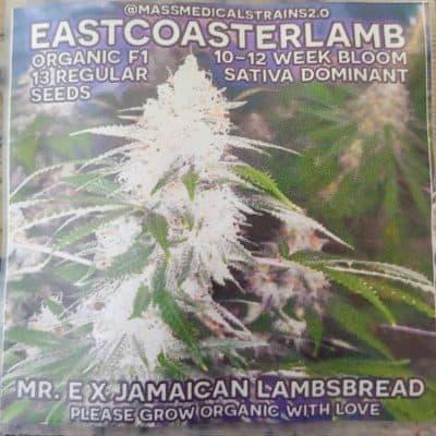 MASS_MEDICAL_STRAINS_EASTCOASTERLAMB_REG_LUSCIOUS_GENETICS