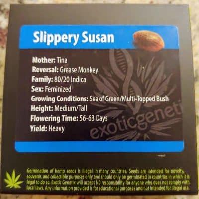 EXOTIC_GENETIX_SLIPPERY_SUSAN_FEM_LUSCIOUS_GENETICS