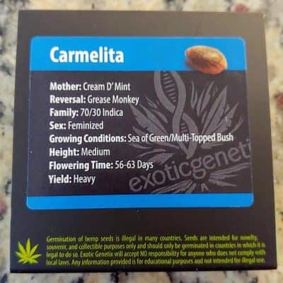 EXOTIC_GENETIX_CARMELITA_FEM_LUSCIOUS_GENETICS