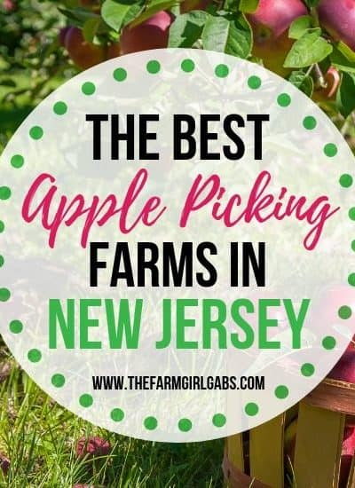 Ready for some fall fun? It's apple season. Take the family to one of the Best Farms To Pick Your Own Apples In NJ.