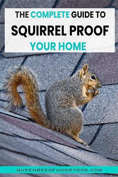 pin image for keeping squirrels out of attic