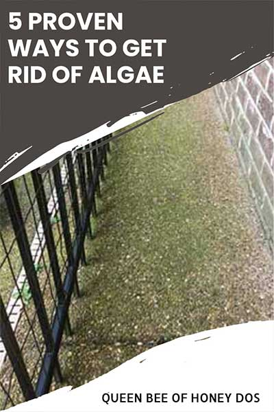 pin image of algae with title heading