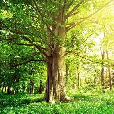 Die Umwelt liegt uns sehr am Herzen. Wir möchten zu einer positiven CO2-Bilanz beitragen und unterstützen www.primaklima.org bei Aufforstungsprojekten auf der ganzen Welt.