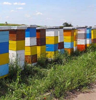 Start your beekeeping business by selling bees