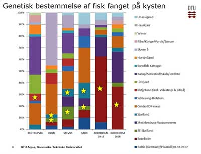 genetisk distribution havørred kystfluefiskeri