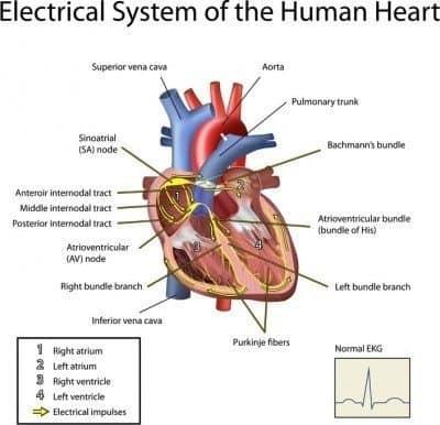 Heart Palpitations | Irregular Heartbeat Explained