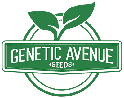 GENETIC_AVENUE_SEEDS_LOGO_LUSCIOUS_GENETICS