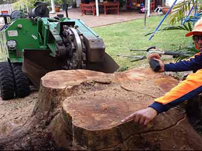Quick Chip Stump Grinding Services Sydney