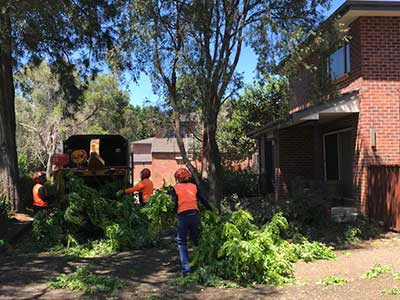 Quick Chip Tree Services Sydney