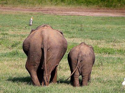 elephant-2130817_1280