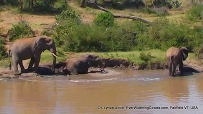 Image: Elephants at a watering hole