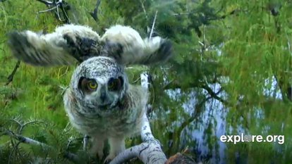 Image: An image taken right before an owl took flight