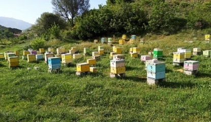 Ideal Beehive Spacing