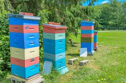 Accessible Beehives
