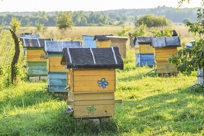 Beehives with Slanted Hive Covers