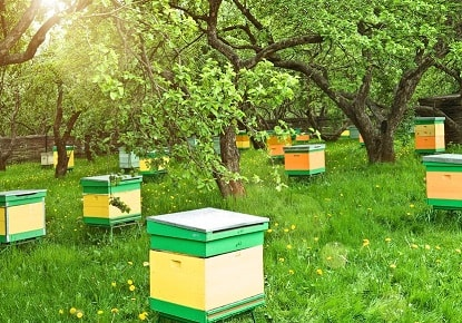 Beehives Out of Direct Wind