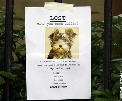 lost dog single poster