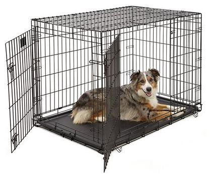 Double Door Wire Dog Crate with Blue Merle Australian Shepherd sitting in it.