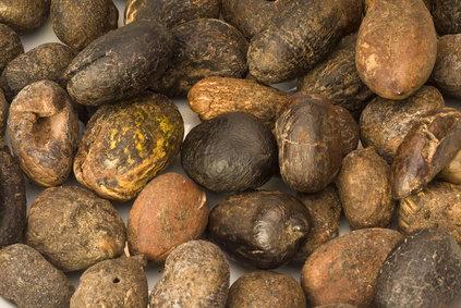 manteca de Karité | semillas