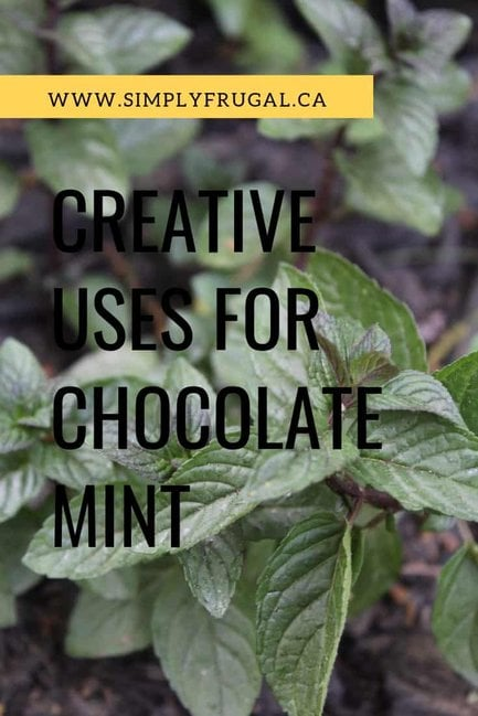 If you grow chocolate mint or are considering it, take a look at these creative uses for chocolate mint that you must try! #herbs #gardening #grow