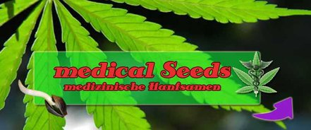 medical Canabis Seeds