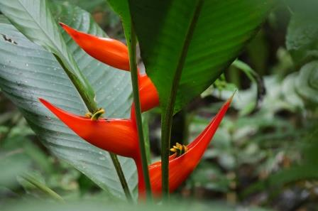 Easy Plants to Remember from the Amazon Rainforest of Ecuador