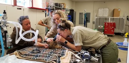 Staff Veterinarian Dr. Kellyn Sweely lets previous intern and current veterinary student Nicole Barney check out Tony's eyes