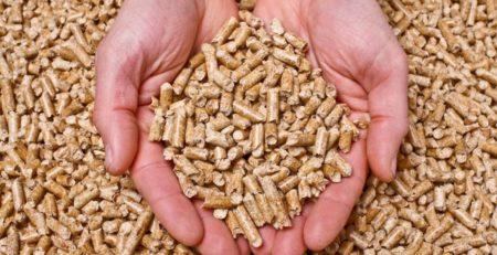 consejos para elegir pellets
