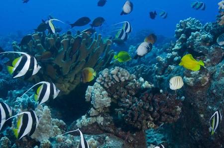 Knob Hill Reef, Steven W Smeltzer, Lanai