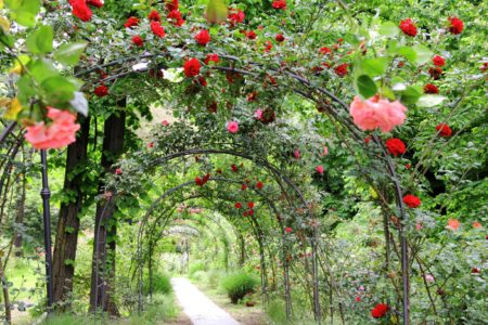 Garden Canopy of flowers