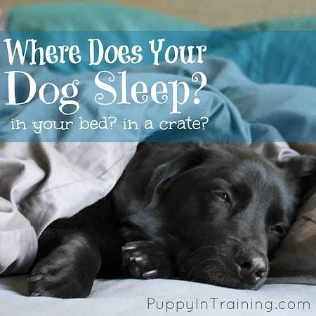Where does your dog sleep?