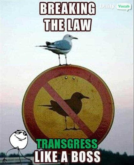 Transgress Vocabulary Word