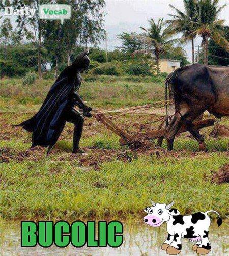 Bucolic picture with batman meme