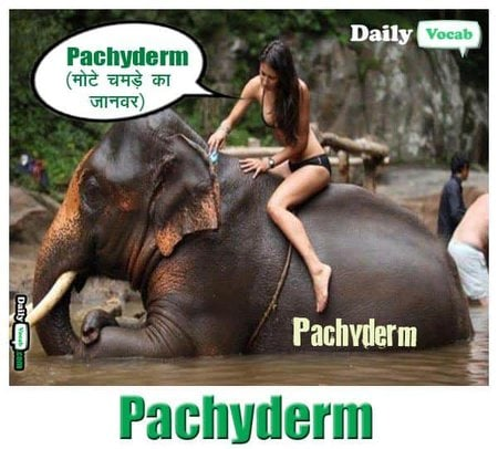 pachyderm English Hindi meaning