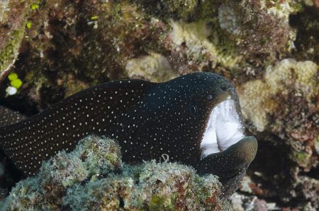Scuba Diving Lighthouse