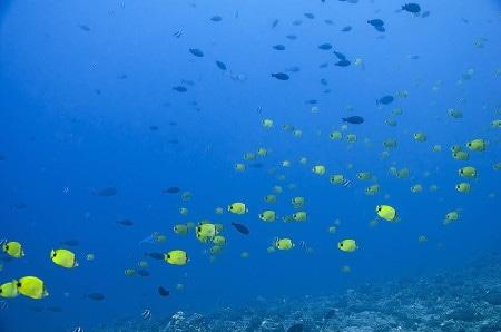 Fish Rain (Steven W Smeltzer)