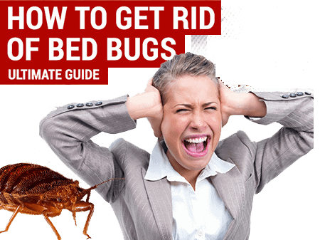 How To Get Rid Of Bed Bugs - Ultimate Guide