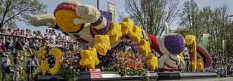 flower parade netherlands
