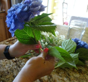 cleaning hydrangeas