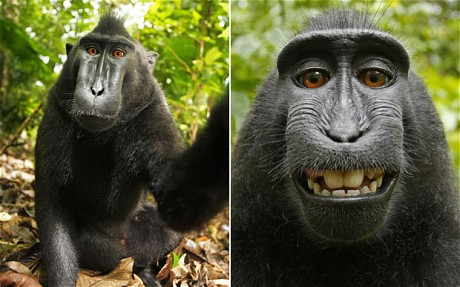 The monkey stole camera from David Slater and made selfie