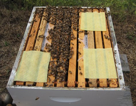 Best hive beetle treatment using mechanical traps and sheets.