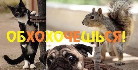 ОБХОХОЧЕШЬСЯ! Невероятно смешные и удивительные животные. Приколы с животными
