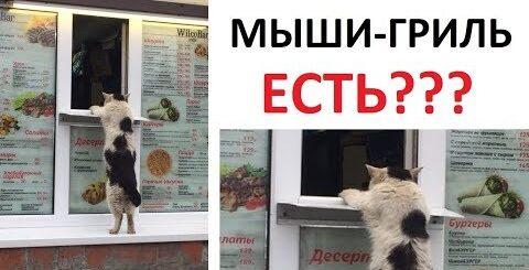 Лютые приколы. Кот покупает шаурму и ПЛОСКАЯ ЗЕМЛЯ