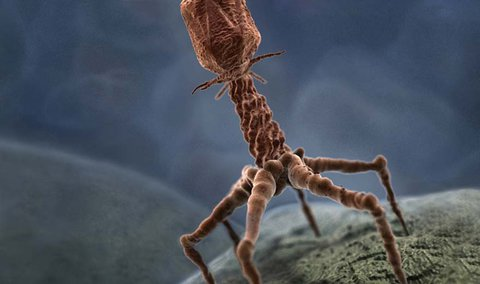 virus phages