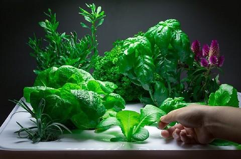 potager vegidair