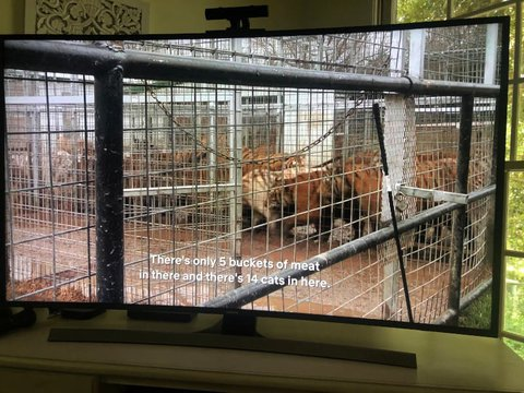 Review of the Tiger King Zoo: Joe Exotic Didn't Love His Animals